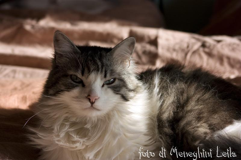 fotografia di gatto