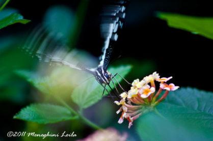 La vita è un battito d'ali