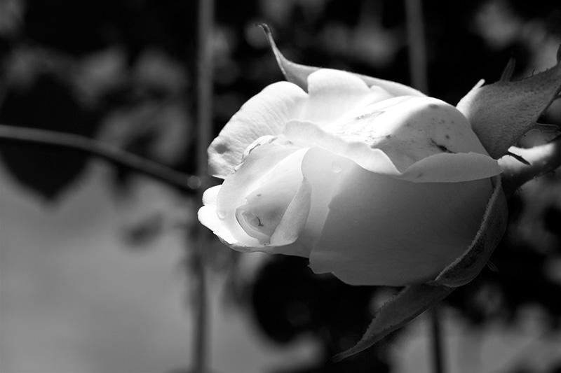 Amore a prima vista (Wislawa Szymborska)